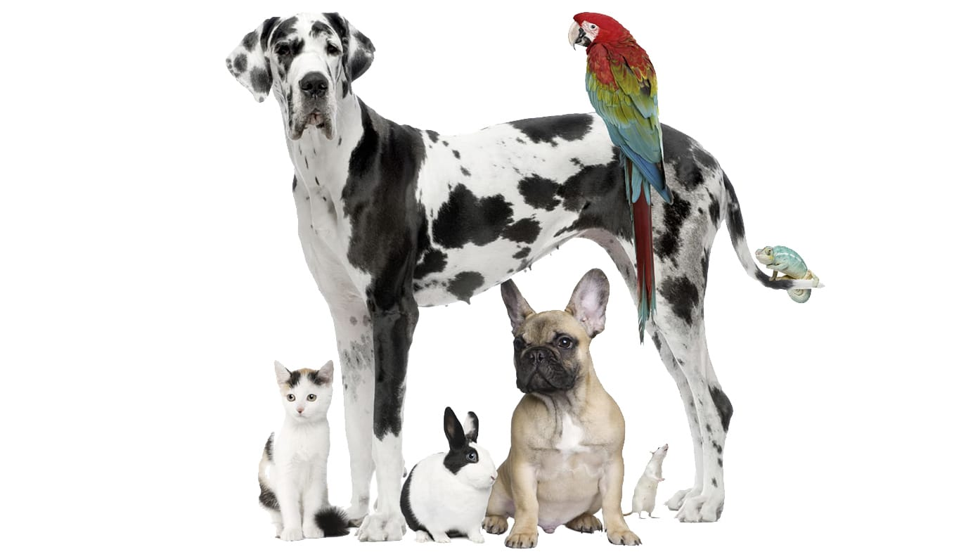Pet care dogs cats birds